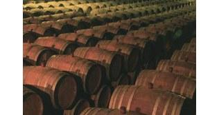 Azienda vinicola_2